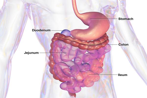 Blausen_0432_GastroIntestinalSystem